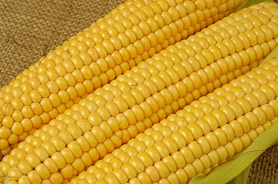 YOUNG COOKED CORN